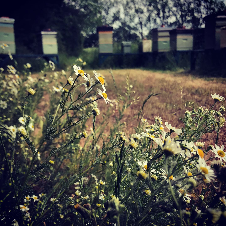 Sunnyfields Honey & Home