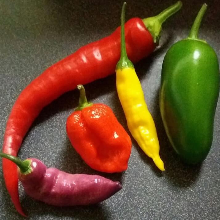 The Wicked Chilli