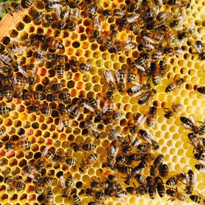 Travelling Bee Company Ltd